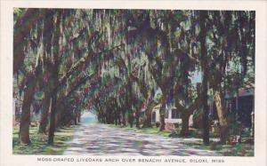 Biloxi Moss Draped Liveoaks Arch Over Benachi Avenue Biloxi Mississippi