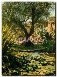 Postcard Modern Colors and Light of France Nature's Miracle French Riviera Ex...