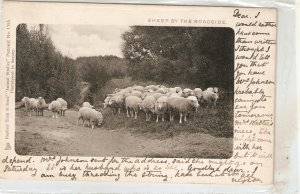 Sheep by the roadside Tuck Animal Studies  Series PC # 1355