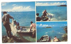 3-Views, Bermuda fisherman hauling innet with a catch of jacks, 30-40s