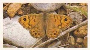 Grandee Vintage Cigarette Card British Butterflies No 2 Wall