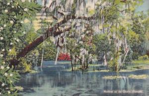 Florida Dunnellon View From Jungle Trail 1942 Curteich