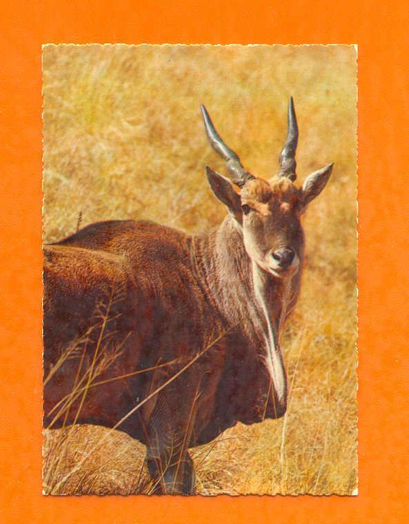 Pc AFRICA WILD LIFE FAUNA ANTILOPE 1960years