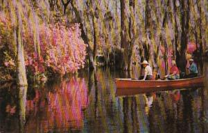 South Carolina Charleston Boating Scene In Cypress Gardens