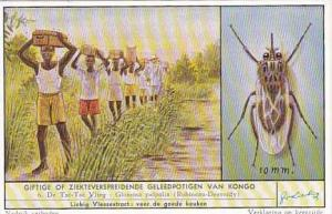 Liebig Trade Card S1637 Harmful Congolese Pests No 6 Tse Tse Fly