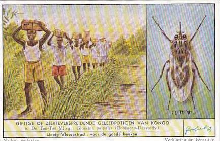 Liebig Trade Card S1637 Harmful Congolese Pests No 6 Tse Tse Fly