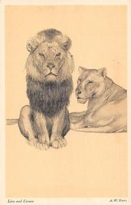 Lion and Lioness Animals, from The Zoo Sketch Book by A.W. Peters
