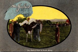 South Africa Ostrich Farm The Juliet 7th Annual Sale Willow Plumes & French C...