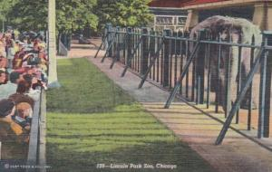 Illinois Chicago Elephants In Lincoln Park Zoo 1949 Curteich