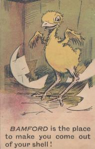 Bamford Yorkshire Bird Egg Chick Hatching Greetings Antique Postcard