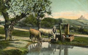 Cows at Watering Hole