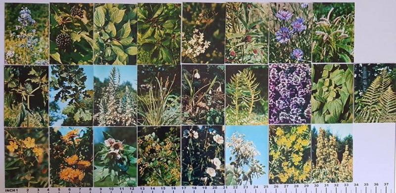 Lot 25 pictorial cards flowers plants