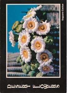 Arizona State Flower Saguaro Cactus Flowers