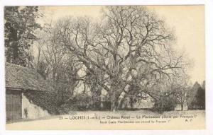 Loches (I.-et-L.), France, 00-10s : Chateau Royal - Le Marronnier plante par ...