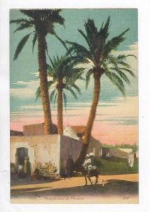 Bedouins at Mosque under plam trees 1900-10s