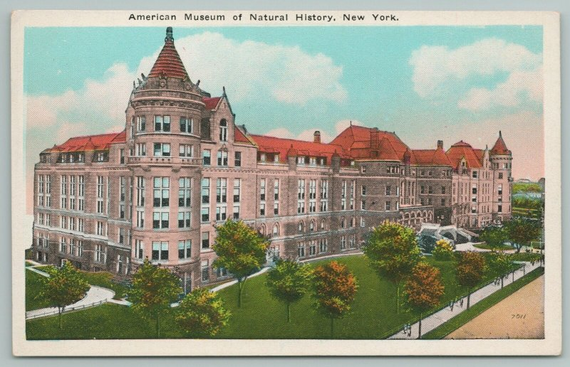 New York~American Museum Of Natural History~Vintage Postcard