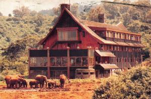 Kenya Nyeri The Arp Elephants Animals Postcard