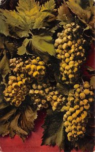 A Cluster of Grapes Still Life 1912