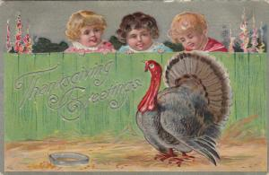THANKSGIVING, PU-1909; Greetings, 3 toddlers looking over fence at turkey