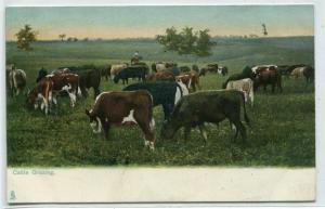 Cattle Grazing Ranch Farming Dallas Texas Tuck series 1910c postcard