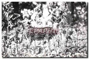 Postcard Old Spotted Deer (Chitwarm Royal National Park) Tiger Tops Jungle Lo...
