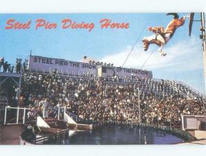 Pre-1980 SEABISCUIT THE DIVING HORSE AT STEEL PIER Atlantic City NJ E7134