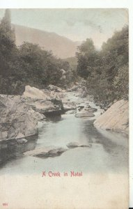 South Africa Postcard - A Creek in Natal - Ref TZ5546