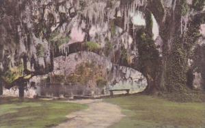 South Carolina Charleston The Large Oak At Tudor Mansion Middleton Place Gard...