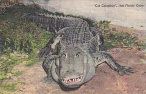 Old Columbus A Florida Alligator 1950 Curteich