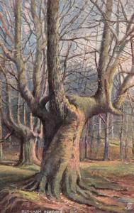 TUCK # 6219 Series , England , 1900-10s ; BURNHAM BEECHES #5