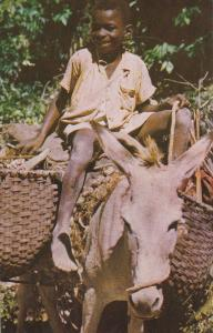 The Little Woodman on a Donkey, JAMAICA, British West Indies, 40-60s