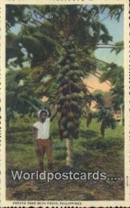 Papaya Tree with Fruit Philippines Unused