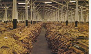 P1773 vintage interior of a loose-leaf tobacco warehouse,a N.C. postcard