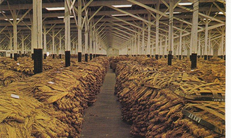 P1773 vintage interior of a loose-leaf tobacco warehouse,a N.C. postcard