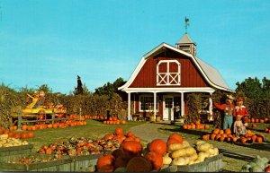 New Jersey Woodcliff Lake Van Riper's Farms Pumpkin Display
