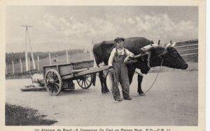 Gaspesian Ox Cart on Perron Blvd , Quebec , Canada ,1910-30s