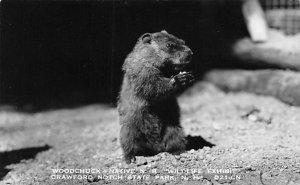 Woodchuck Squirrel / Chipmunks / Woodchucks Crawford Notch State Park, NH, US...