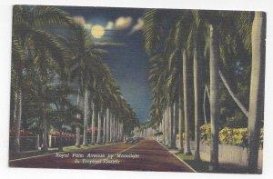Florida Royal Palm Avenue by Moonlight Vintage Linen Postcard Curteich