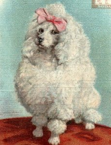 1900s Dwight's Soda New & Champion Dog Series Toy Poodle Lot Of 6 P222