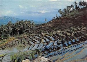 Indonesia A Fine View of The Rice Fields Terrace at Bukit Djambul