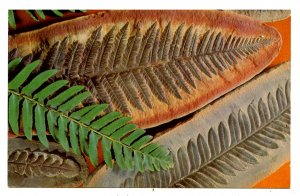 Fossil Ferns & Living Fern