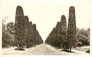 1930s Real Photo Postcard; Cypress? Tree Lined Street Well's Road, Palm Beach FL