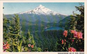 Oregon Mount Hood Rhododendrons And Mount Hood
