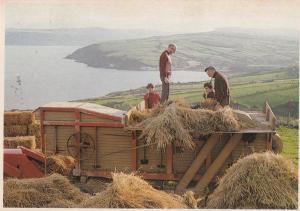 Threshing In Ireland Postcard