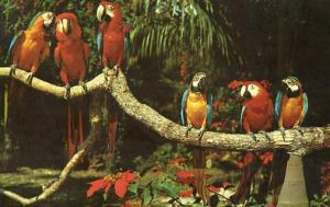 FL - Miami. Parrot Jungle