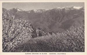 Almond Orchard In Bloom Banning California Albertype
