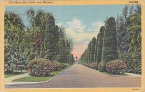 Trees Australian Pines and Hibiscus In Florida 1951 Curteich