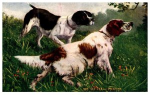 Dog , Setter and Pointer , National Sportsman Catalog