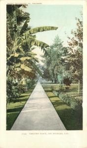 Los Angeles California~Detroit Publishing #7334 Chester Place~c1905 Postcard