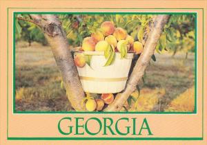 Basket Of Peaches Georgia